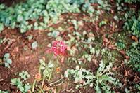 咲き始め - BobのCamera