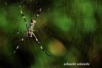 蜘蛛さん - 今が一番
