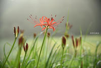 ひっそりと咲く - 詩輝彩物語