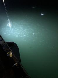 仕事後にロック。 - 北海道・岩手釣りブログ
