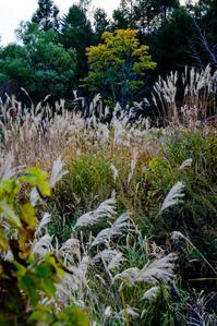 どこにでもある風景 - ナンちゃんの天然色写真&白黒写真