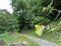 埼玉のスジボソヤマキチョウ - 秩父の蝶
