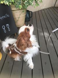 秋 - Cafe Myrtille