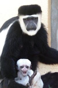 白い赤ちゃん - 動物園放浪記