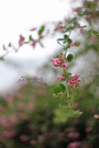 まゝに/9月の散策、昭和記念公園3 - Maruの/ まゝに
