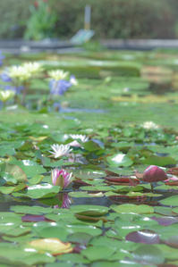As a tribute of respect to Monet...3 - 気ままにお散歩