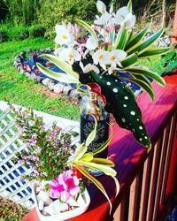 お花パワー - Nature Care