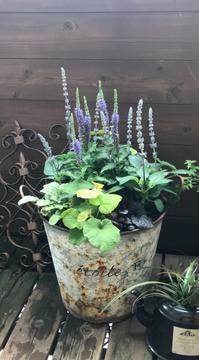 寄せ植え作りました♪ - 小さな庭 2