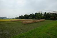 収穫 - エンジェルの画日記・音楽の散歩道