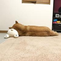 左向きで寝ましょう - 赤坂・ニューオータニのヘアサロン大野ザメイン店ブログ