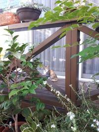 猫 - 柴犬 ひろゆきと さもない毎日&週末自宅カフェ里音 (りをん) 一之江・笑い療法士のいるカフェ