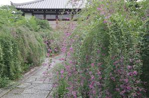 常林寺萩 -
