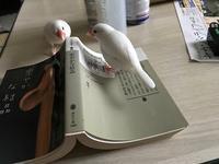 本を読んでいたら。。 - つれづれ日記