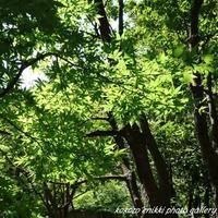 「秋の匂い」 - こころ絵日記