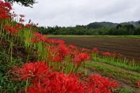 ヒガンバナと小湊鐵道 - フォト エチュード  Photo-Etudes