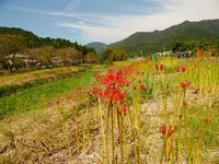 東海自然歩道 - 飛騨山脈の自然