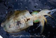 ティップラン開始時期について - 鯛ラバ遊漁船  Miyazaki Offshore Boat Game Marine Frog 2