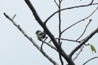■ 鳥の季節はじまる   18.9.19   (エナガ、ヤマガラ) - 舞岡公園の自然2