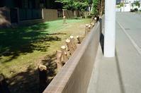 生垣ヒバの伐採とアナログ電話回線 - 照片画廊