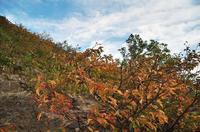 岩手山で出会った風景-2 - 自然と仲良くなれたらいいな2