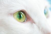 純真無垢な瞳 - Omoブログ