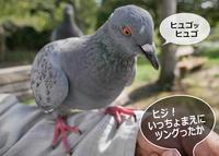 明石公園 2018.09.19 夏の名残 - At Studio TA