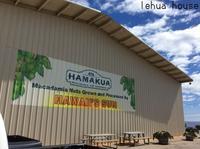ハマクア・マカダミアナッツ !ハワイ島コハラ滞在記2018.9 - Hawaiian LomiLomi サロン  華(レフア)邸