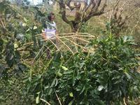 コロス集落の台風22号(フィリピン名:オンポン)の被害状況 - Cordillera Green Network ブログ