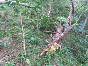 台風22号(フィリピン名:オンポン)による  フィリピン・ルソン島北部山岳地帯の農業被害と支援のお願い - Cordillera Green Network ブログ