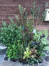 秋のコンテナ植栽 - 花の庭づくり庭ぐらしガーデニングキララ