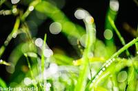 朝の輝き - harley-katydid