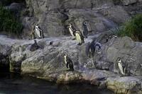 夜の不思議の水族園~世界の海は闇の中(葛西臨海水族園) - 続々・動物園ありマス。