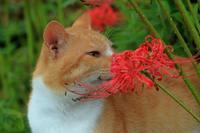 猫たちの近況 - 愛にゃんブログ