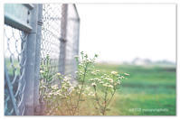 好きな感じ。 - Yuruyuru Photograph