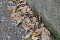 枯葉を掃く音 - 空色のココロ~小さな幸せを探して~