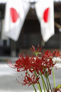 もう一つの彼岸花@古千谷氷川神社 - みるはな写真くらぶ