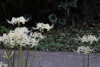 足立区の街散歩337「葛飾区篇」 - 一場の写真 / 足立区リフォーム館・頑張る会社ブログ