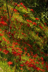 紅と緑と - ノッツォのホデナス