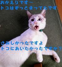 降臨 - 八幡地域猫を考える会