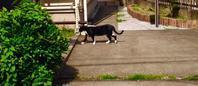 昨日は暑かった - 猫多摩散歩日記 2