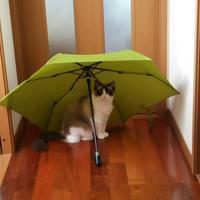 雨だけど楽しく行こうツィッター画像より - 猫多摩散歩日記 2