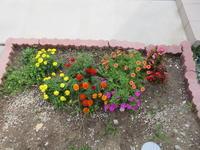小っちゃい花、見つけた♪ - 69歳からの写ガール