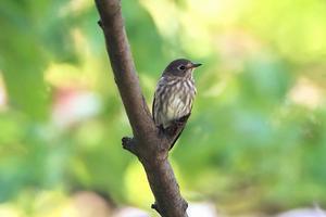 Lovely bird - Granpa ToshiのEOS的写真生活