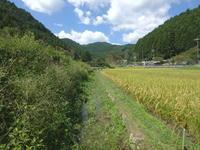 ミヤマアカネを観に… - 加茂のトンボ (トンボ狂会)