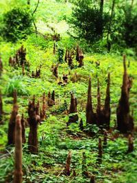悪魔の森 (´艸`*) - のーんびり hachisu 日記