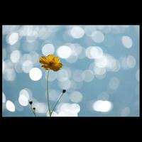 ☆ untiled ☆ - ON ANY SUNDAY 2.............