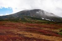 【大雪山】姿見~裾合平まで紅葉散策へ - へっぽこあるぴにすと☆