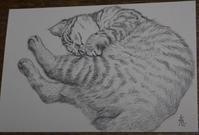 猫のスケッチ - 絵と庭