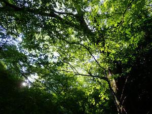 脊振山(福岡市早良区) - 風来坊のアウトドアライフ