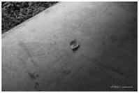 初秋 - BobのCamera
